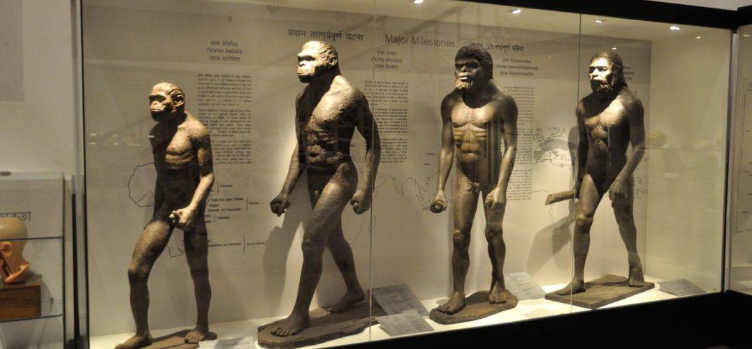 Human-Evolution-Biswarup-Ganguly-Wikimedia-Commons-1076x588