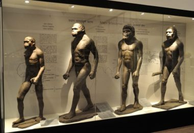 Human-Evolution-Biswarup-Ganguly-Wikimedia-Commons-1076x588